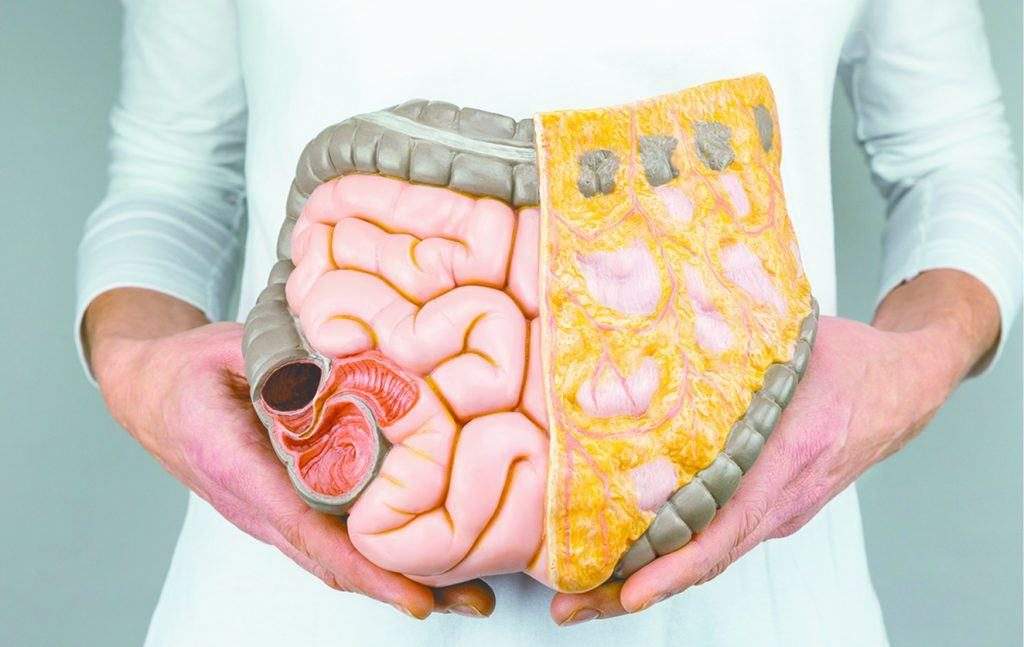 Why is the Colon Important to Health?